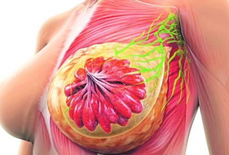 CBD for Breast Cancer