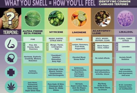 Common Cannabis Terpenes